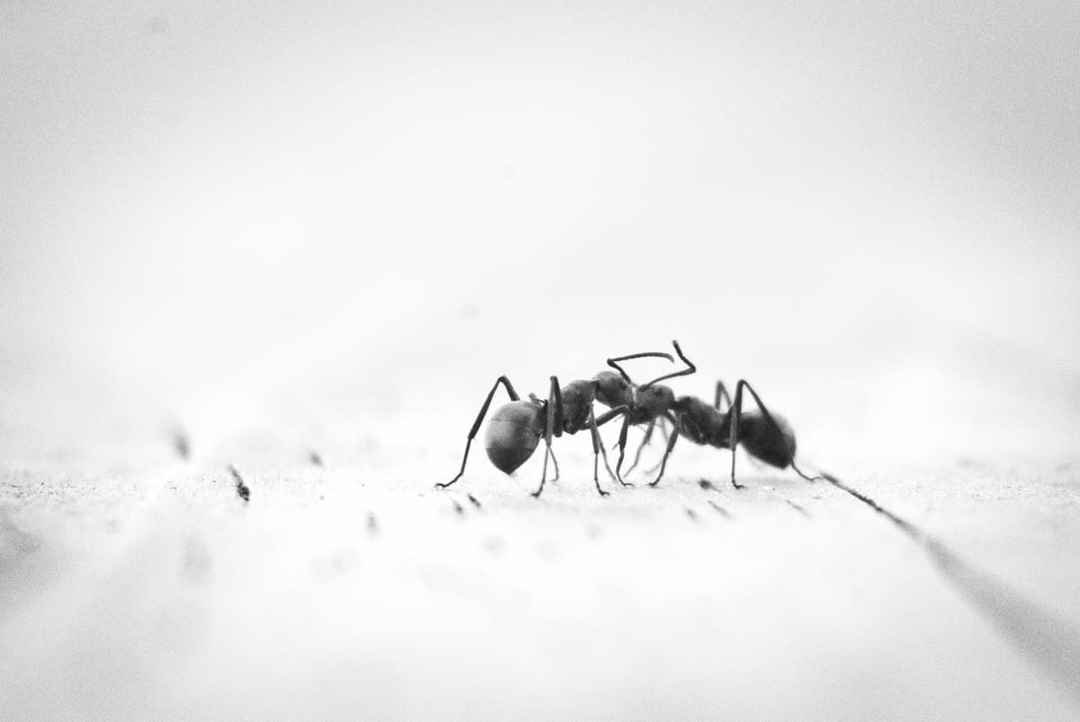 Ant Prevention and IPM Exterior Control